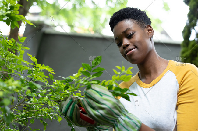 African American woman wearing gardening gloves touching plants in the garden. self isolation in quarantine lockdown