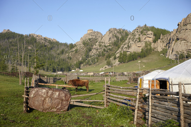 Yurts and a wooden fence in the Gorkhi-Terelj National Park in Mongolia