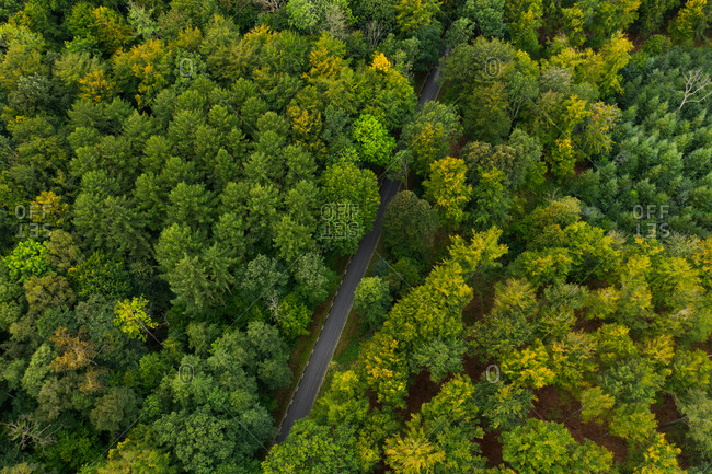 Dense green forest surrounding rural road viewed from above