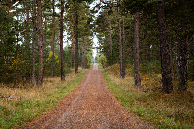 Rural dirt road lined with trees