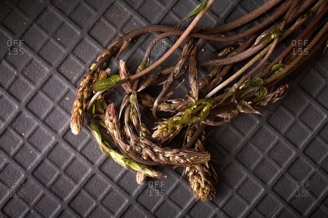 Close up of wild asparagus on a black slate stone