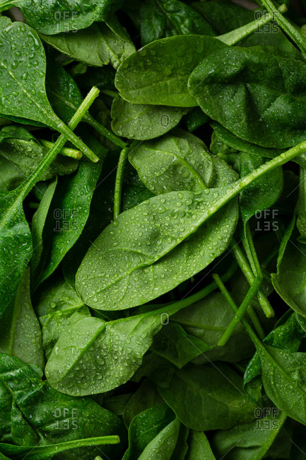 Overhead view of spinach leaves with water drops