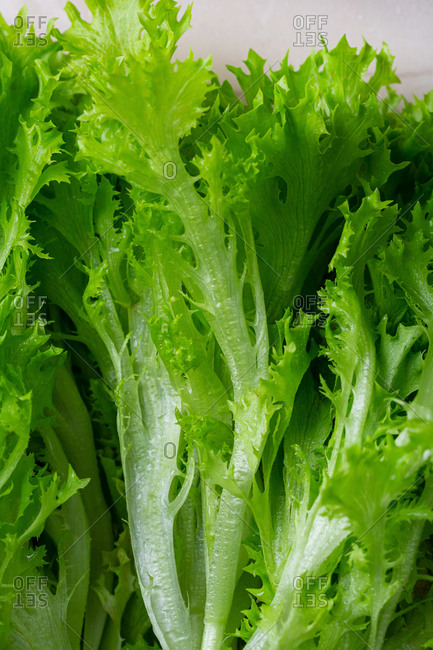 Green lettuce salad background from above
