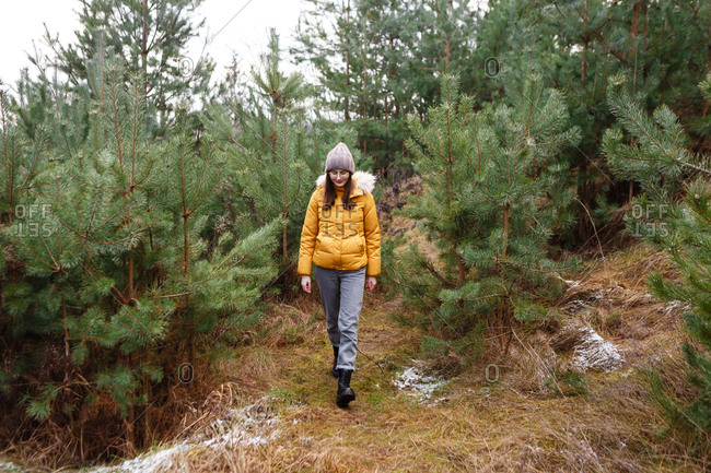 The young female woman in a yellow winter jacket is walking between the pine trees in the  green fores