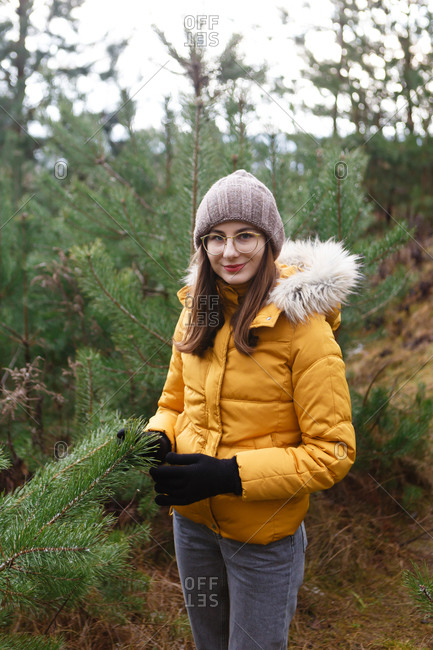 The young female woman in a yellow winter jacket is walking between the pine trees in the  green forest and touching the trees