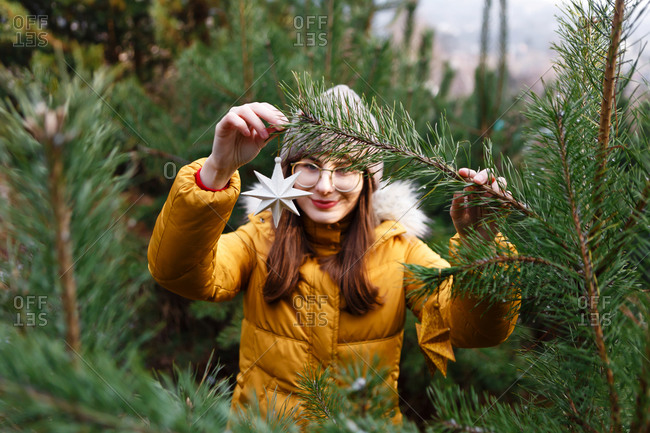 The young female woman in a yellow winter jacket is standing between the pine trees in the  green forest and is decorating the pine with the Christmas stars (balls/ baubles)