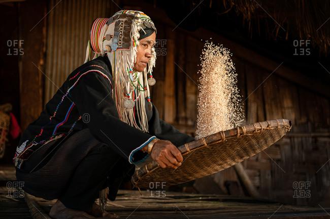 AKHA HILL TRIBE, HOKYIN VILLAGE, MYANMAR - 24 January 2018: Woman in traditional costume thrashing rice in warm sunlight.