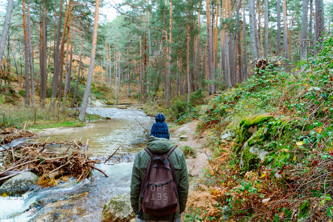 Back view of unrecognizable hiker in warm clothes walking along mountain river flowing through coniferous forest while exploring nature of Sierra de Madrid in Spain in autumn day