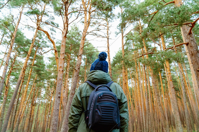 Low angle back view of male traveler with backpack standing in coniferous woods with tall pine trees during vacation in Sierra de Madrid