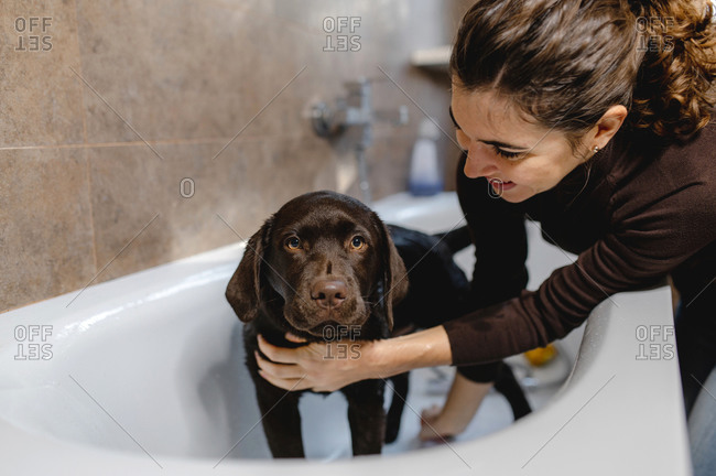 Side view of happy young female owner petting cute Labrador puppy dog standing in bathtub after washing procedure in home bathroom