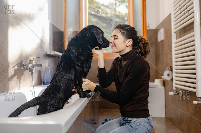 Side view of happy young female owner petting cute wet Labrador puppy dog standing in bathtub after washing procedure in home bathroom