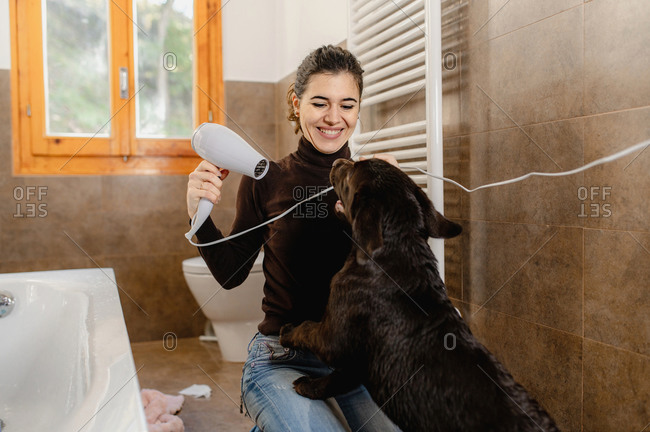 Cheerful young female owner with hairdryer taking care of Labrador puppy after bathing in bathroom