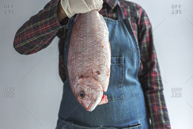 Unrecognizable crop chef wearing apron and gloves standing with raw bream fish in studio