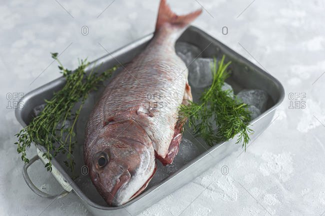 From above of raw bream fish placed in metal dish with ice cubes and green herbs on table