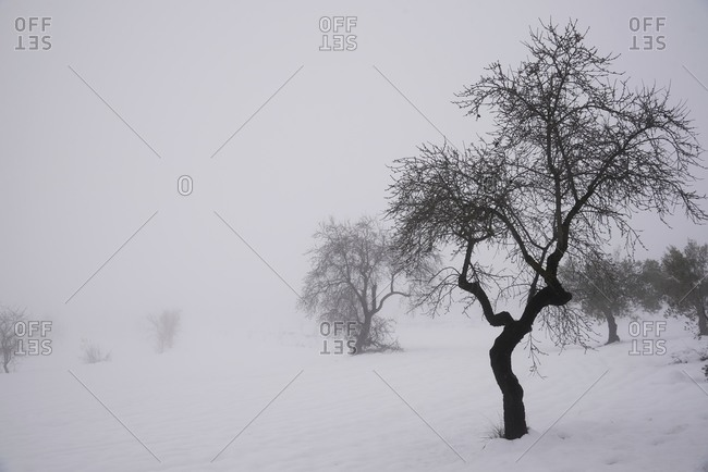 Scenery of leafless trees growing in row on snowy ground on misty day in winter