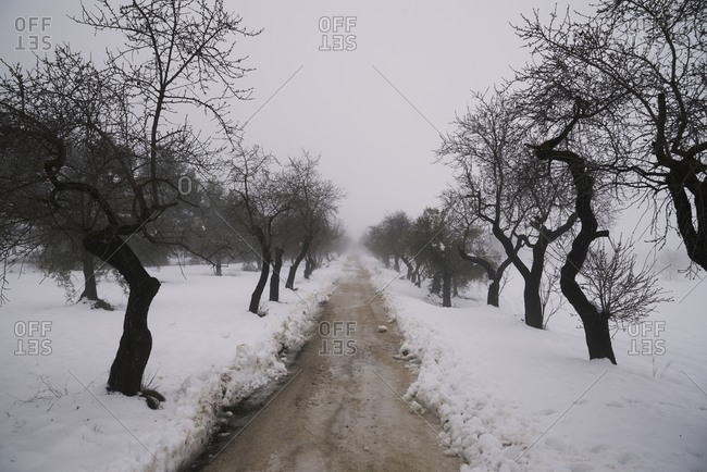 Snowy forest with leafless trees growing along dirty road on gloomy winter day under gray sky