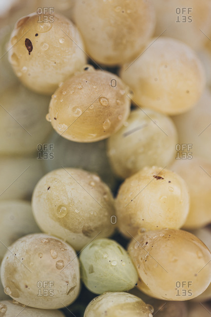 Extreme close up of a bunch of white grapes freshly washed