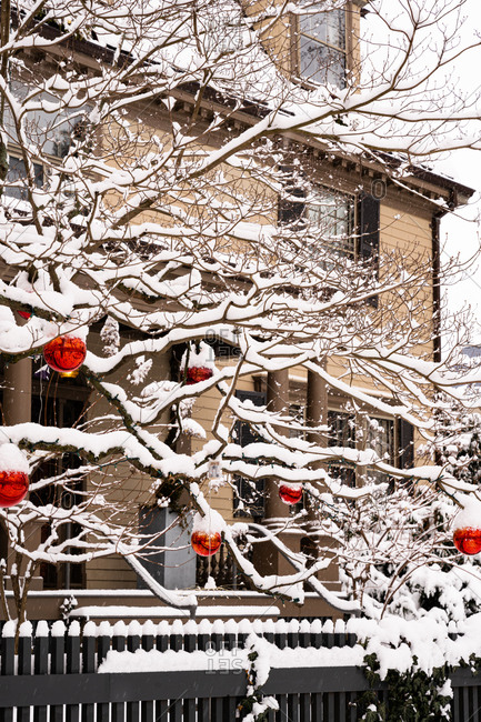 Fresh snowfall on tree wit red bulbs outside of a residential home
