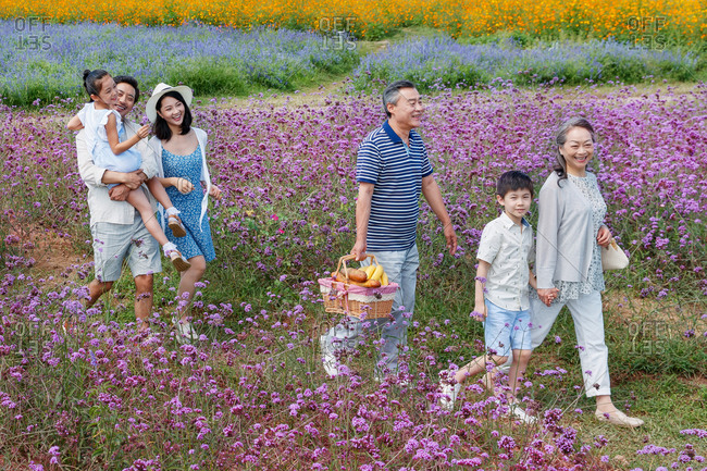 Happy multi-generational family walking with picnic basket in a lavender field