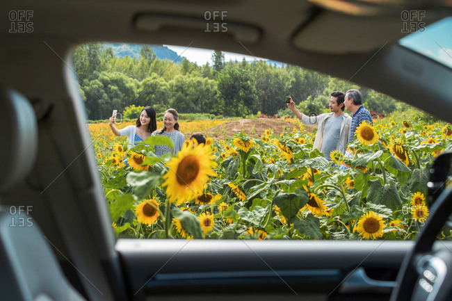 View through car window of family taking selfies in a sunflower field