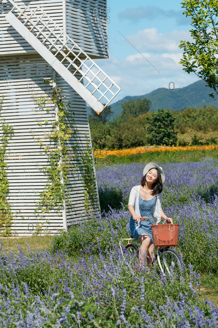A young woman riding a cruiser bicycle in a field of lavender on a sunny day by windmill