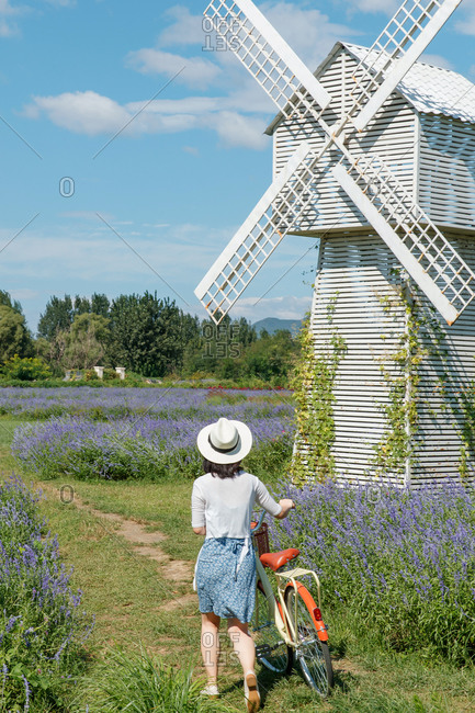 Rear view of a young woman walking a cruiser bicycle in a field of lavender on a sunny day by windmill