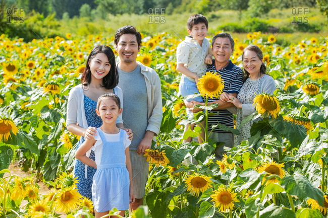 Beautiful multi-generational family standing in a field of sunflowers