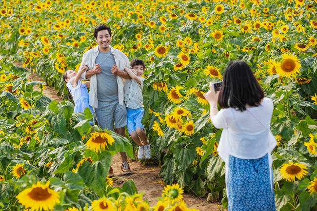 Woman taking picture of kids and their father in a field of sunflowers
