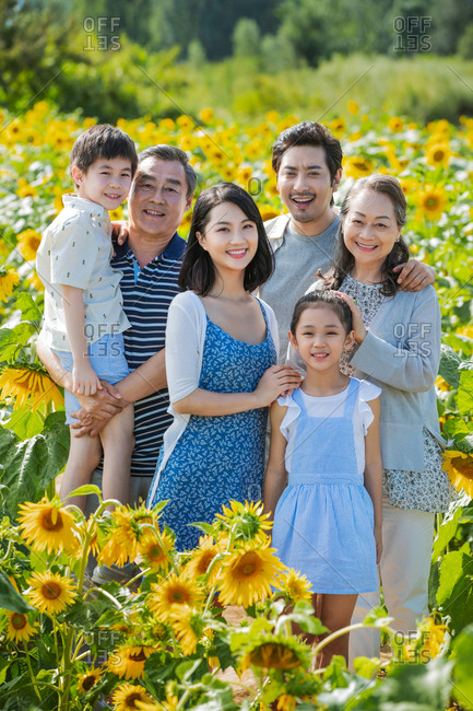 Portrait of a beautiful family standing together in a field of sunflowers
