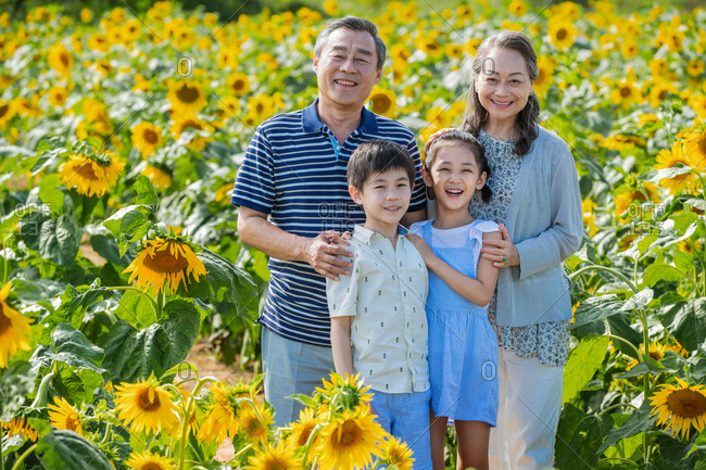 Portrait of happy Asian grandparents standing with grandkids in a field of sunflowers