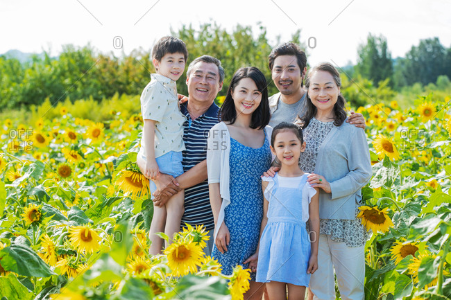 Portrait of a beautiful Asian family standing together in a field of sunflowers