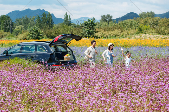 Family walking away from car in a field of flowers to find a picnic spot