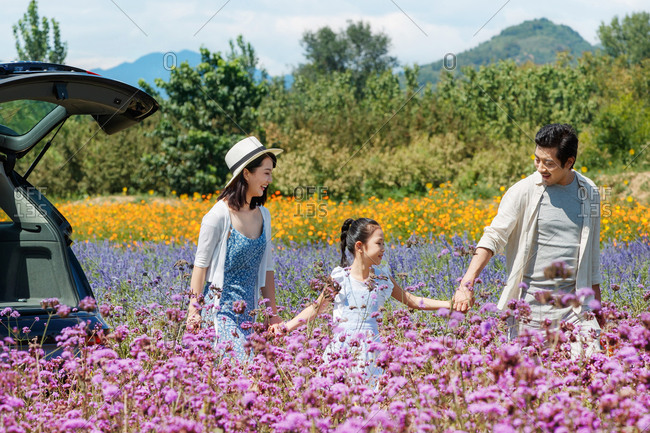 Young couple walking hand in hand with their daughter in a field of flowers