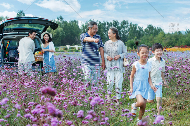 Happy multi-generational family unloading car for a picnic outing in field with purple flowers
