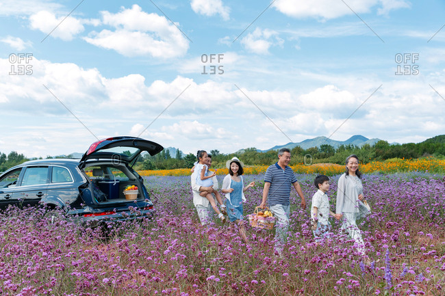 A multi-generational family carrying picnic basket through field of purple flowers