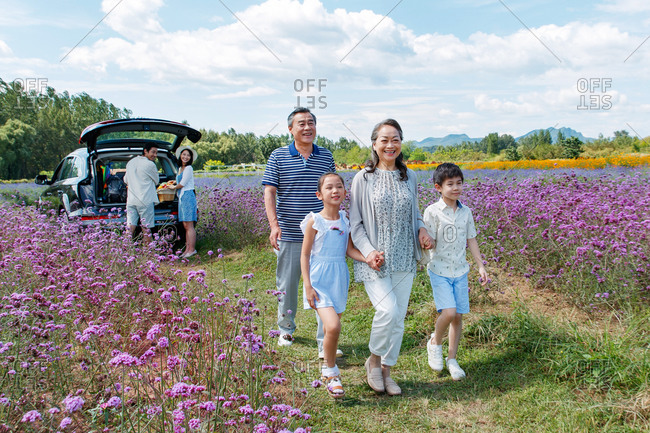 Happy Asian grandparents walking with grandkids in a field of purple flowers while couple gets picnic basket out of car