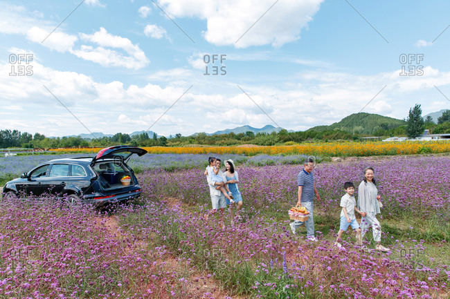 Multi-generational family walking with picnic basket in a field of flowers