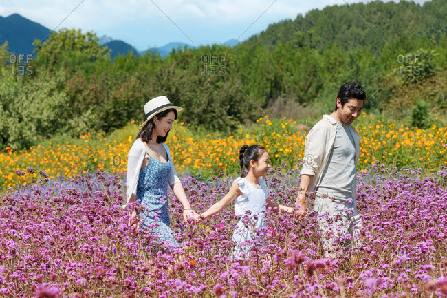 Little girl holding hands with her parents while walking in a rural field filled with flowers