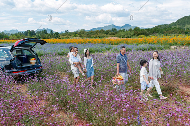 An Asian multi-generational family walking with picnic basket in a field of flowers