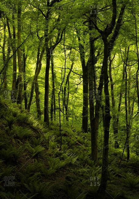 Woodland of Cosheston at Pembrokeshire- Wales- UK