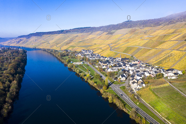 Germany- Rhineland-Palatinate- Bernkastel-Kues- Helicopter view of hillside vineyards stretching along riverside town in autumn