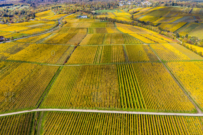 Germany- Hesse- Oestrich-Winkel- Helicopter view of yellow countryside vineyards in autumn