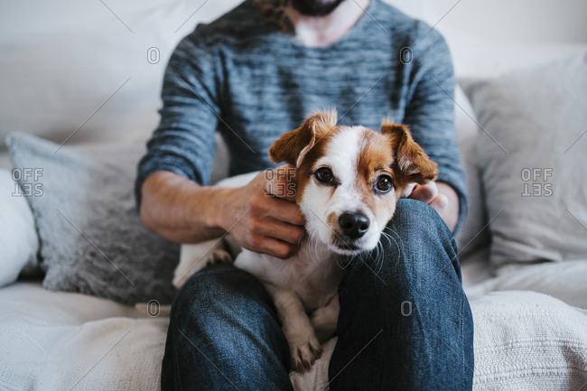 Cute dog resting on man lap while sitting on sofa at home