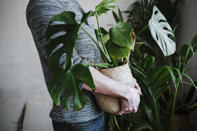 Young man holding Monstera plant in wicker while standing at home