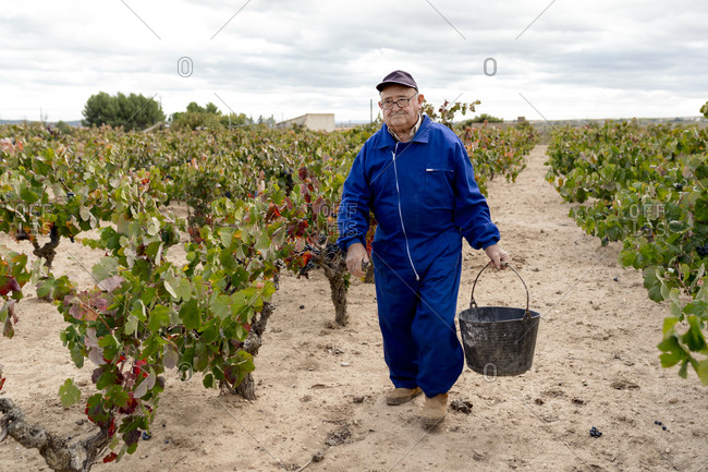 Senior man carrying bucket of grapes while walking in vineyard