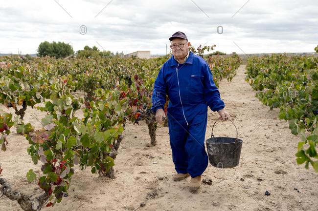 Senior man carrying bucket of grapes while walking in vineyard