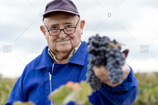 Senior man with bunch of black grapes against sky