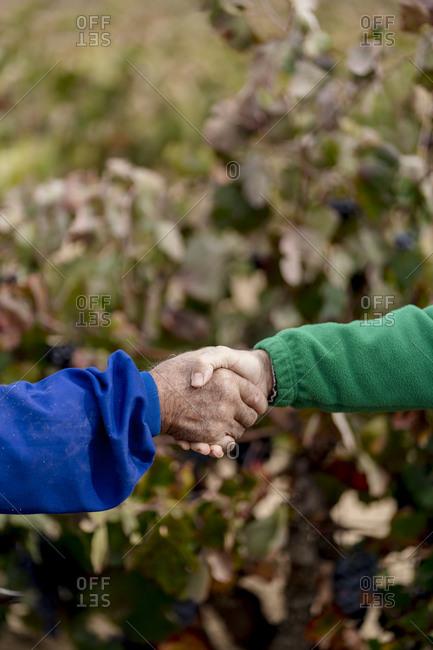 Farmers shaking hands in vineyard