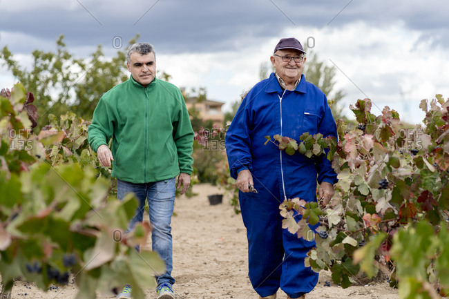 Male farmers discussing while walking in vineyard