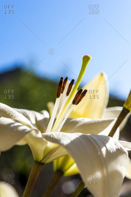 Head of white blooming flower